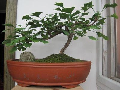 盆景 盆栽 植物 400_300