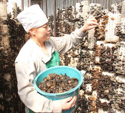 扎兰屯市242万元奖励黑木耳种植 功臣