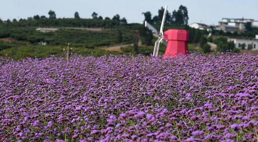 发展出一批各具特色的现代农业庄园,包括葡萄酒庄园,万亩玫瑰园